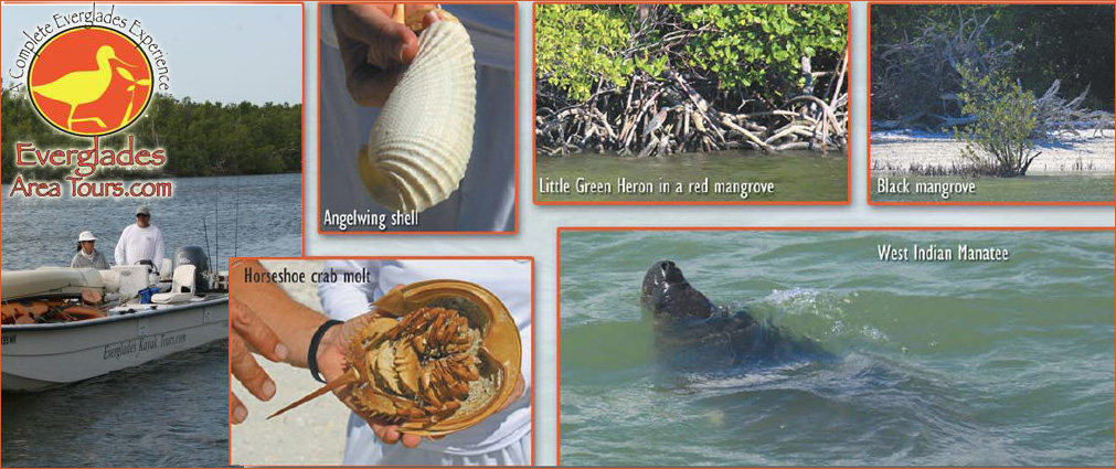 Everglades Area Tours Blog